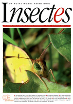 Insectes 171