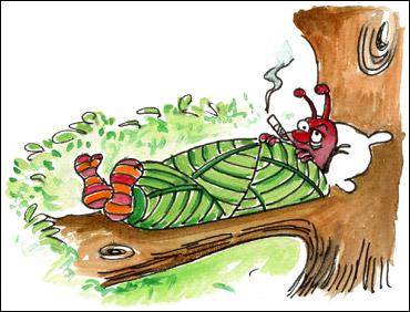 Cigarier du noisetier