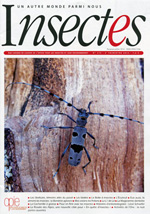Insectes 173