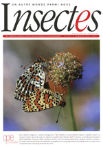 Insectes 175