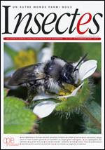 Insectes 177