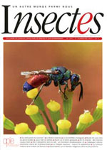 Insectes 184