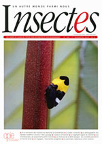 Insectes 185