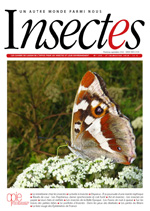 Insectes 186